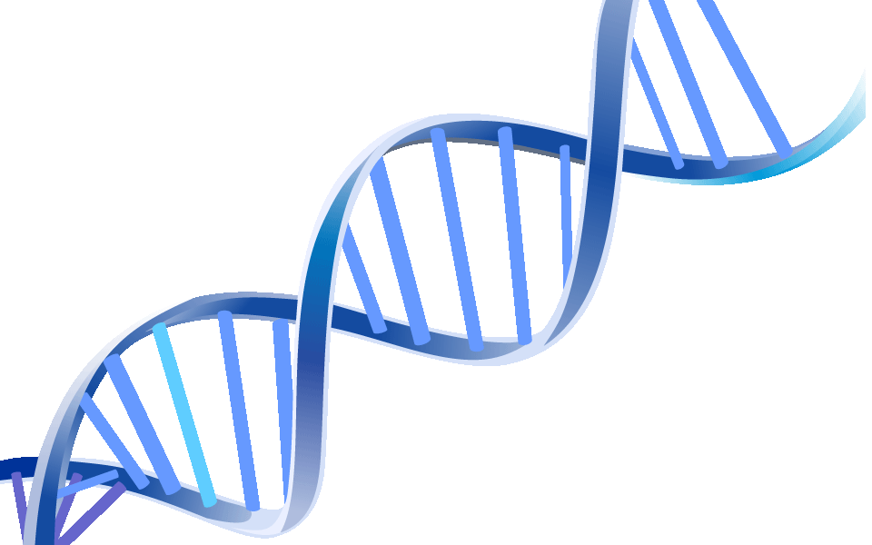 DNA Modelle selbstgebaut